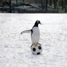Uno dei Pinguini di Mr. Popper alle prese con un pallone da calcio