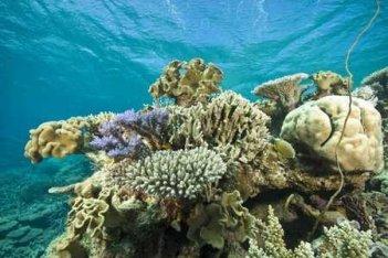Un'immagine tratta da Under the Sea 3D