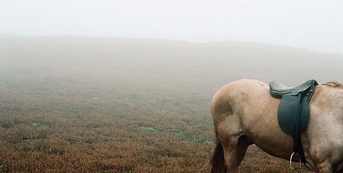 Un Cavallo Immerso Nella Nebbia In Una Scena Di Wuthering Heights 211876