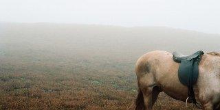 Un cavallo immerso nella nebbia in una scena di Wuthering Heights