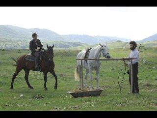 Cavalli, una scena del film di Michele Rho