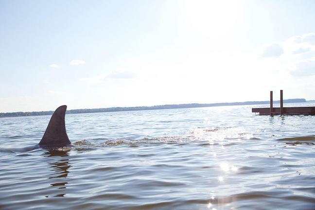 Uno Squalo Nel Film Shark Night 3D 213390