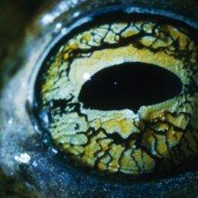 L'occhio di un rettile nel film La Clé des champs