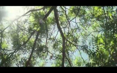 Trailer - Oranges and Sunshine