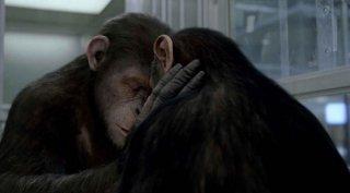 L'alba del pianeta delle scimmie: una toccante scena del film