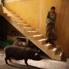 Una certa diffidenza nei confronti del porcellino in una scena di Un insolito naufrago nell'inquieto mare d'Oriente