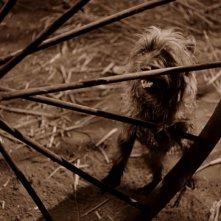 Il piccolo cane Toto in una scena de Il mago di Oz