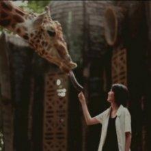 Postcards From The Zoo: una scena tratta dal film diretto dal giovane Edwin