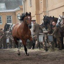 War Horse: una bella immagine del cavallo Joey in una scena tratta dal film
