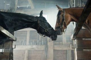 War Horse: una tenera immagine dei cavalli protagonisti tratta dal film