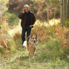 Kevin Kline porta a spasso il suo cane in Darling Companion