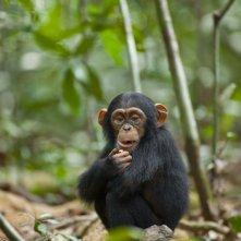 Chimpanzee, una sequenza del documentario realizzato nel 2012