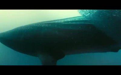Trailer Italiano - La vita negli oceani