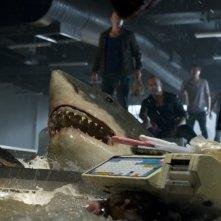 Bait: uno degli squali assassini del film