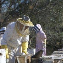 More Than Honey: una scena del documentario di Markus Imhoof