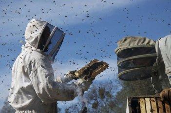 More Than Honey: una scena tratta dal documentario di Markus Imhoof