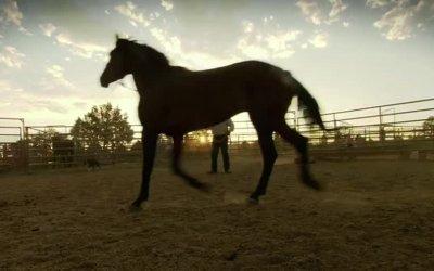 Trailer - Wild Horse, Wild Ride