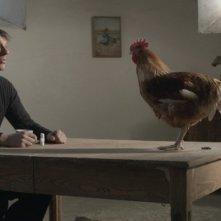 La cinquième saison: Sam Louwyck parla con una gallina in una scena del film