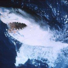 Lo squalo: un'immagine della creatura