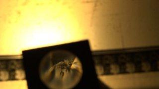 L'uomo che amava il cinema: una scena del documentario che omaggia Piero Tortolina