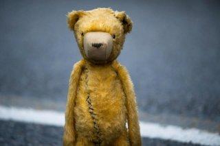L'orsetto protagonista di Animals, pellicola spagnola del 2012