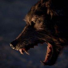 The Grey: uno dei pericolosi lupi che danno la caccia agli sfortunati protagonisti