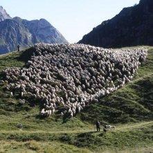 L'ultimo pastore: il gregge di pecore di Renato Zucchelli in una scena del film