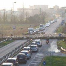L'ultimo pastore: il gregge di pecore di Renato Zucchelli verso Milano blocca il traffico