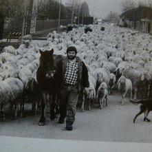 L'ultimo pastore: il pastore Renato Zucchelli da giovane in una scena del film