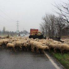 L'ultimo pastore: una scena tratta dal film