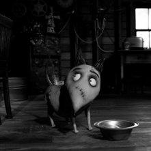 Frankenweenie: Sparky mangia nella sua ciotola in una scena del film d'animazione