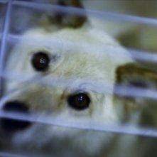 Il primo piano di un cane nel documentario Fukushame, di Alessandro Tesei
