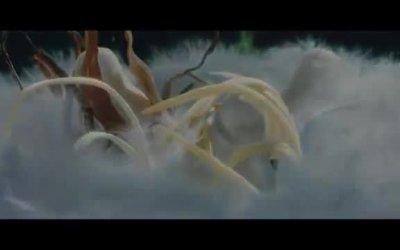 Trailer Italiano - Marsupilami