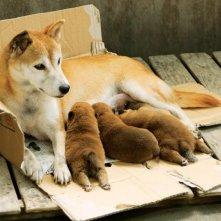7 Days of Himawari & Her Puppies: una tenera immagine del cane protagonista del film