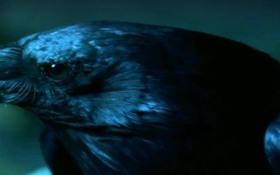 Trailer - Ravenswood