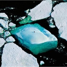 Planet Ocean: una scena del documentario di Yann Arthus-Bertrand e Michael Pitiot