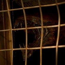 Riddick: una spaventosa immagine tratta dal film