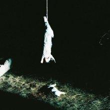 Story of my Death: sacrificio animale in una scena del film
