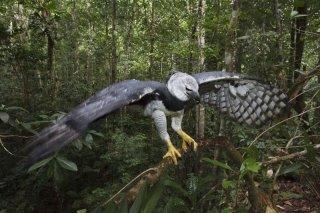 Amazonia: un'immagine del documentario di Thierry Ragobert