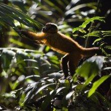 Amazonia: un'immagine tratta dal documentario