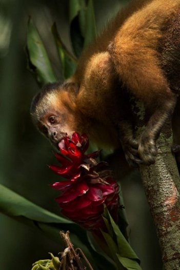 Amazonia: un'immagine tratta dal documentario sull'Amazzonia