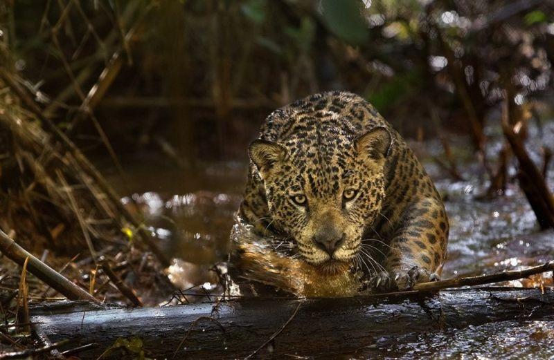 Amazonia: una scena