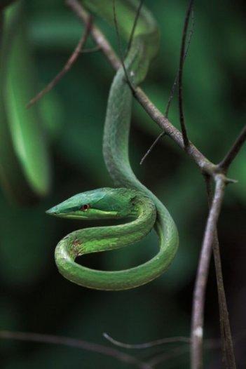 Amazonia: una scena tratta dal film