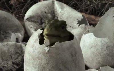 Trailer - Spotty il dinosauro 3D
