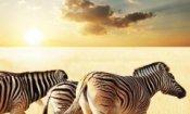 African Safari 3D dal 21 novembre al cinema