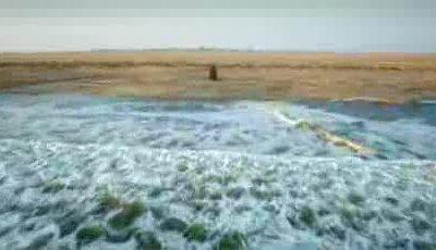 Trailer - African Safari 3D