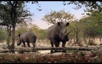 Trailer Italiano - African Safari 3D