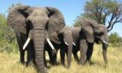 African Safari 3D: vai al cinema e vinci la magia dell'Africa