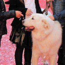 Belle & Sebastien: la star del red carpet al Festival di Roma 2013 è un bellissimo cane bianco