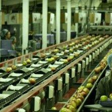 C.O.G.: Jonathan Groff nei panni di David in una scena nel reparto di selezione delle mele